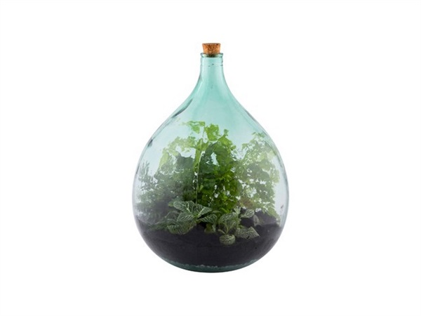 Set Terrarium in vetro Large, 35 lt